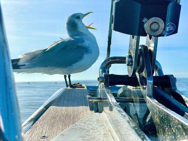 Birds-on-the-Bow-Tina-Merlino-1
