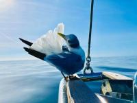 Birds-on-the-Bow-Tina-Merlino-2