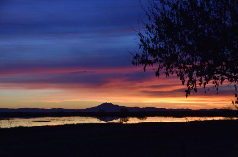Twilight in the Delta