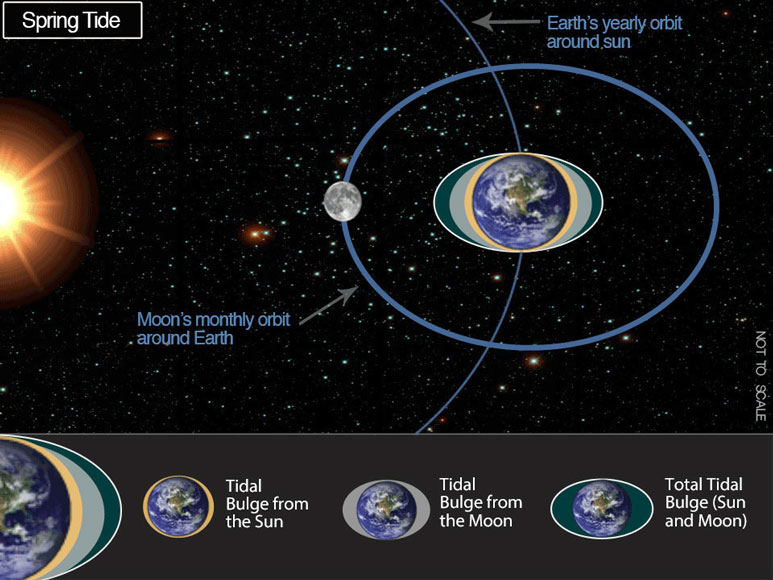 Spring Tide graphic
