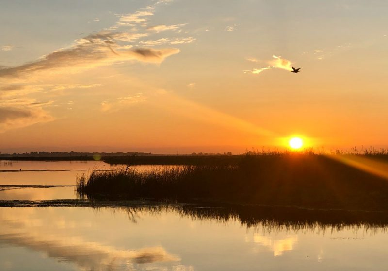 Sunset with bird