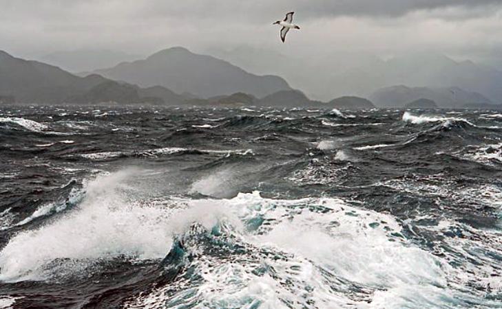 bird above choppy seas