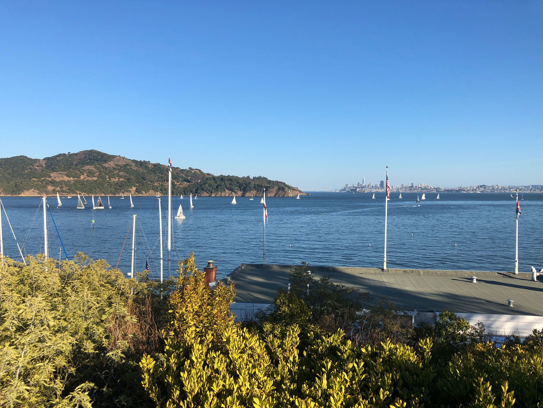 Cool and calm in Tiburon
