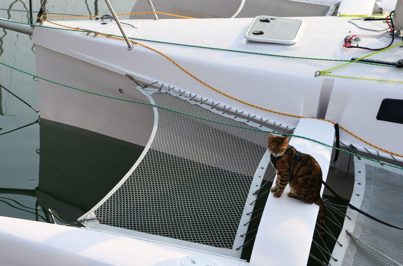 奥利,一只在特里斯的孟加拉猫