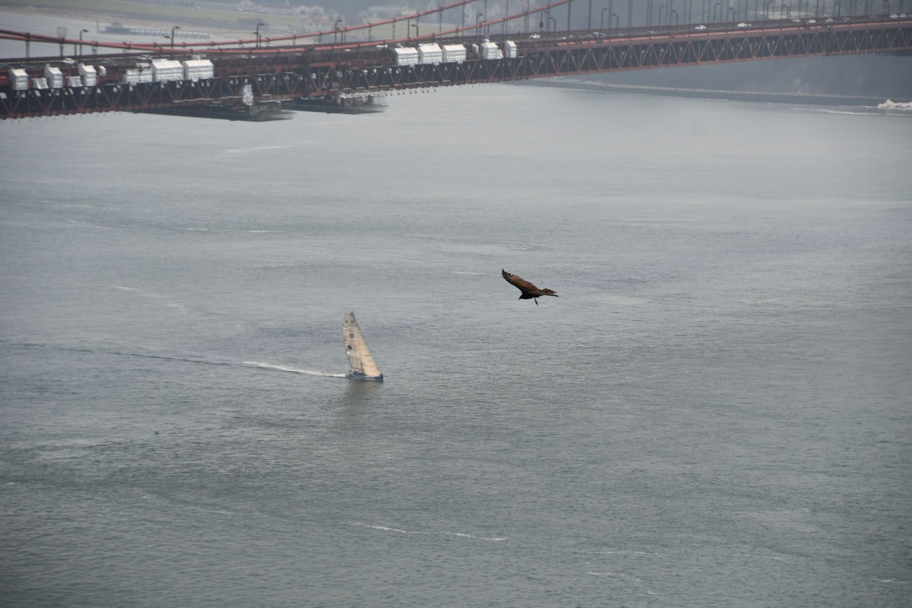 Changabang sails under Golden Gate Bridge
