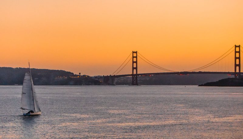 Sparrow and Golden Gate Bridge