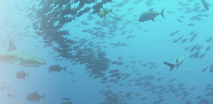 Shark Week film screenshot
